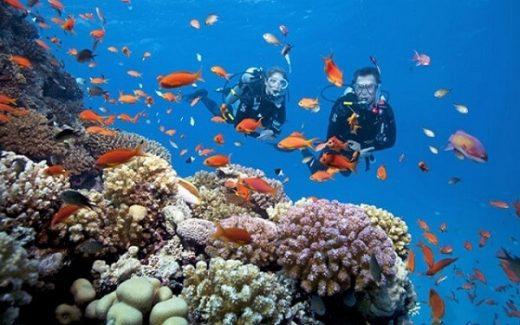 Tour du lịch ngắm san hô tại Nha Trang.